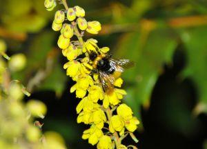 1168824_bumblebee