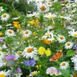 Garden Tiller Maintenance – It's That Time Of hour Again