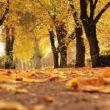 Listopad miesiącem świadomości raka płuca i raka prostaty